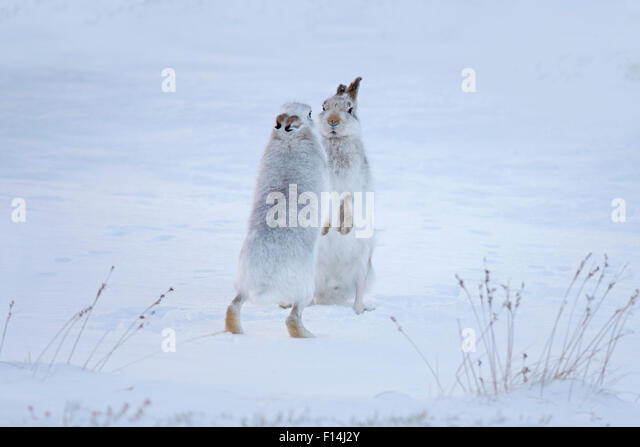 On hind legs stock photos amp on hind legs stock images alamy