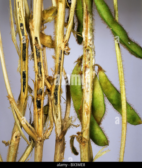 how to fix stem rot