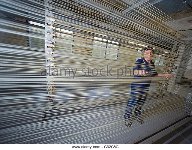 Cow gut drying at Bow Brand factory in Kings Lynn, Norfolk, whereafter it will be  used to make harp strings. - Stock Image
