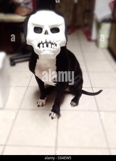 Masked dog - Stock Image
