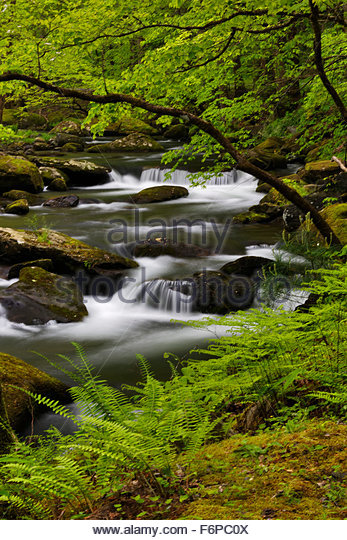 Mountain Stream in spring time, Middle Prong, Great Smoky Mountains National Park. - Stock Image