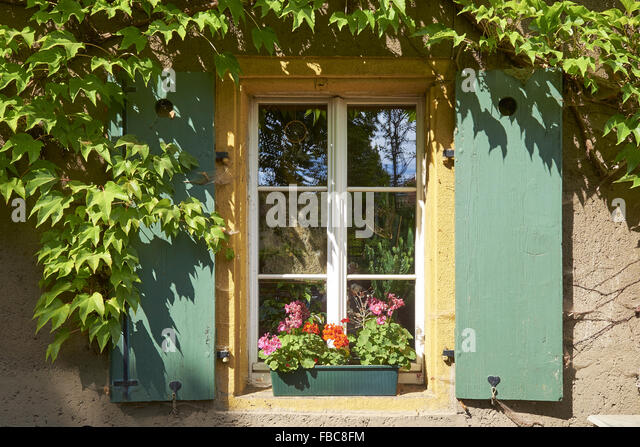 Window with vine leaves in Radebeul, Saxony, Germany - Stock Image
