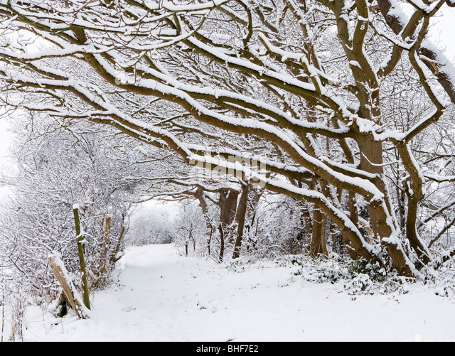 Path under snow laden trees. Send, Surrey, UK. - Stock-Bilder