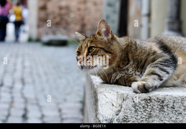Lazy alley cat - Stock Image