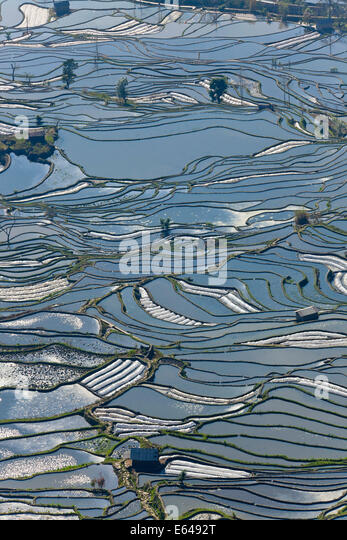Reflections of water filled rice terraces, Yuanyang County, Honghe, Yunnan Province, China - Stock Image