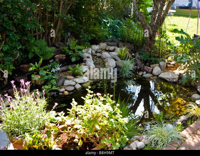 Wildlife garden pond - Stock Image