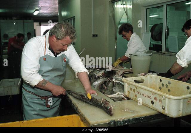 Fish industry in Scotland Man gutting fish - Stock-Bilder