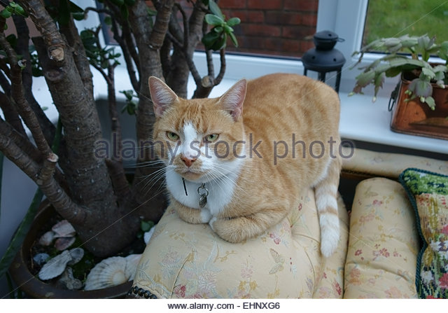 Ginger plants stock photos ginger plants stock images for Cat chaise longue