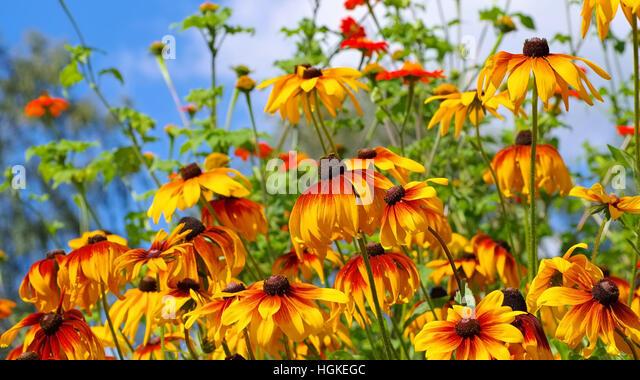 summer flower garden beet stock photos summer flower. Black Bedroom Furniture Sets. Home Design Ideas
