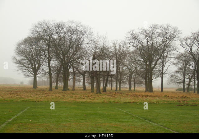 London, UK. 30th Dec, 2016. Trees by a football pitch on Wanstead Park seen through the morning fog on December - Stock Image