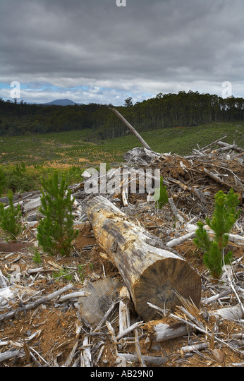 logging deforestation nr Yolla Cam Valley north west Tasmania Australia - Stock Image