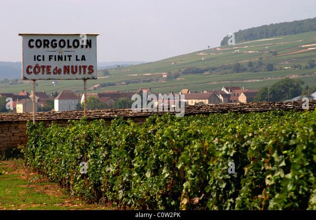vineyard corgoloin the end of cote de nuits clos des langres ardhuy nuits-st-georges cote de nuits burgundy france - Stock Image