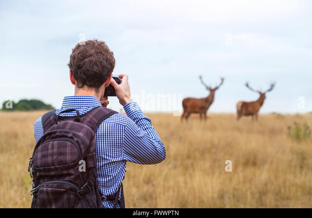 photographer taking photo of wildlife, man with camera and two deers in the nature - Stock Image