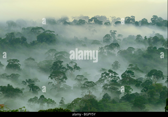 Canopy of the lowland rainforest at dawn, Danum Valley Conservation Area, Sabah, Borneo, Malaysia - Stock Image