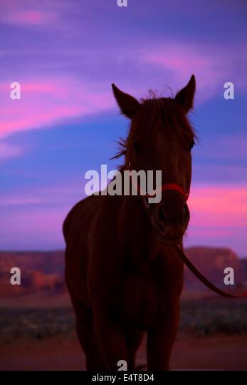 Arizona horse horses stock photos amp arizona horse horses stock images