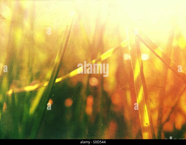 Grass on a summers day - Stock Image