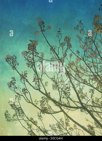 Branches, twigs, leaves and flowers with vintage, painterly texture overlay with blue and yellow gradation. - Stock Image