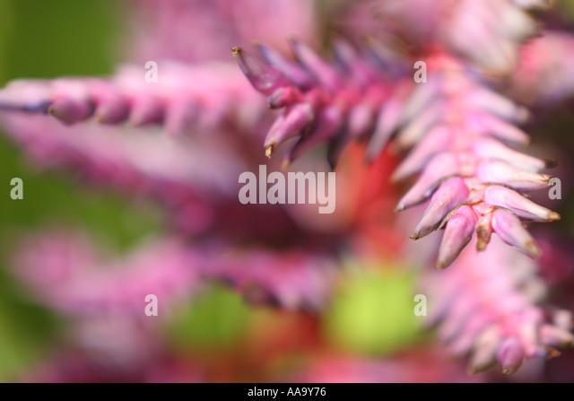 Florida, tropical plant, flora, growing, life, purple, narrow focus, - Stock Image