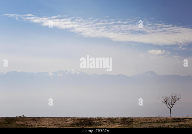 Turkey, Single tree with mountains in background - Stock Image