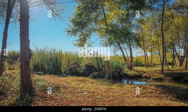 Open meadow with trees just turning in early autumn at the edge of the lake in Blount Cultural Park, Montgomery, - Stock Image
