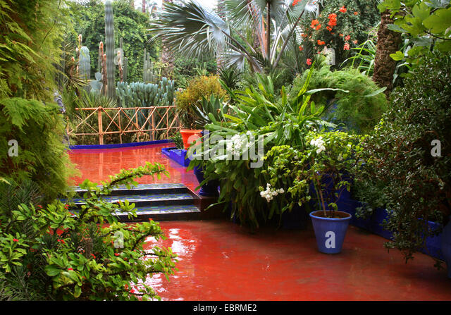 Cacti plants in majorelle gardens stock photos cacti for Jardin yves saint laurent