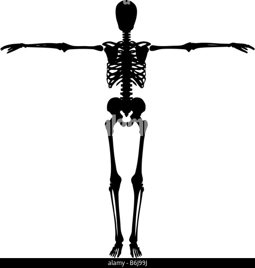 bones and shoulder stock photos  u0026 bones and shoulder stock