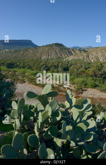 Morocco Cactus Stock Photos Morocco Cactus Stock Images Alamy