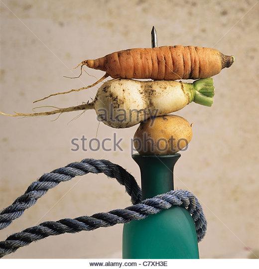 Carrot, potato, parsnip, bottle, rope - Stock Image