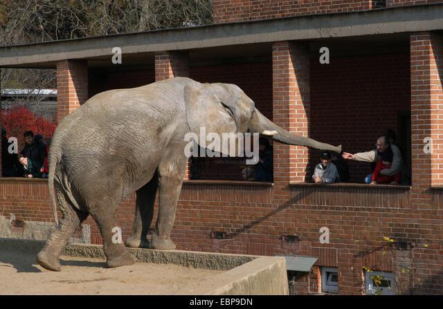 People touch elephant stock photos people touch elephant for Designhotel elephant prague 1 czech republic
