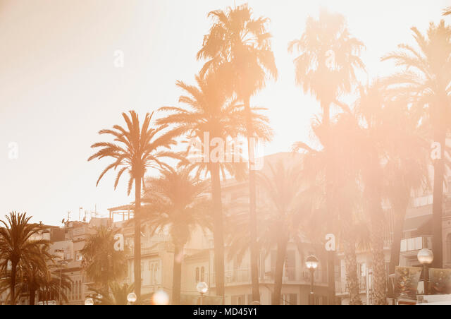 Scenic view with palm trees, Sitges, Catalonia, Spain - Stock Image