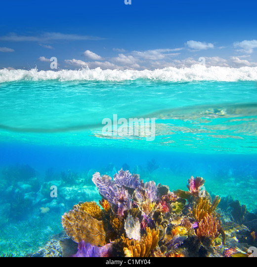 Mayan Riviera coral reef underwater up down waterline Mexico - Stock Image