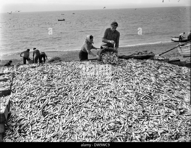 Seining stock photos seining stock images alamy for Seine net fishing