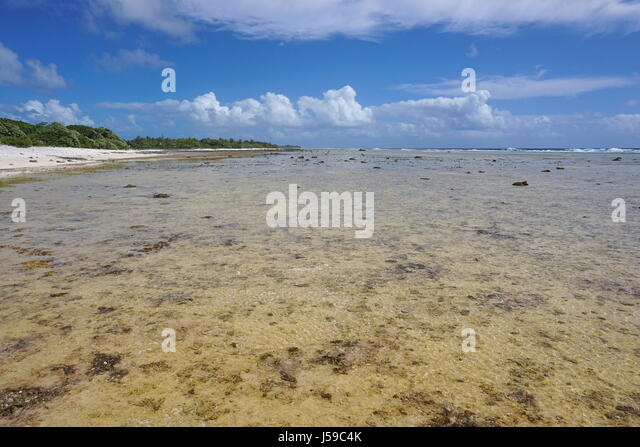 Shore of the open ocean side of the atoll of Rangiroa in the Tuamotus archipelago, French Polynesia, south Pacific - Stock Image
