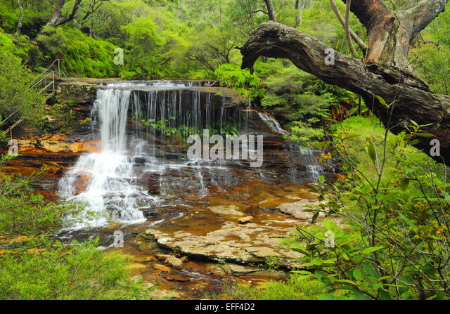 Weeping Rock waterfall on Jamison Creek, upstream of Wentworth Falls in the Blue Mountains, NSW, Australia. - Stock Image