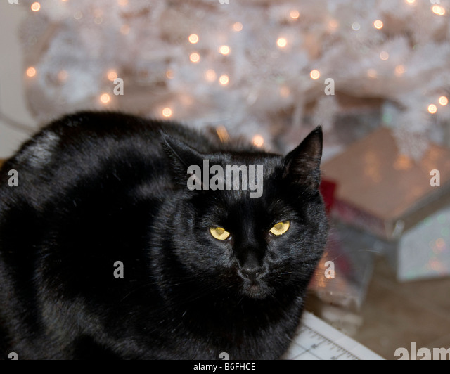 Black And White Cat Christmas Stock Photos & Black And