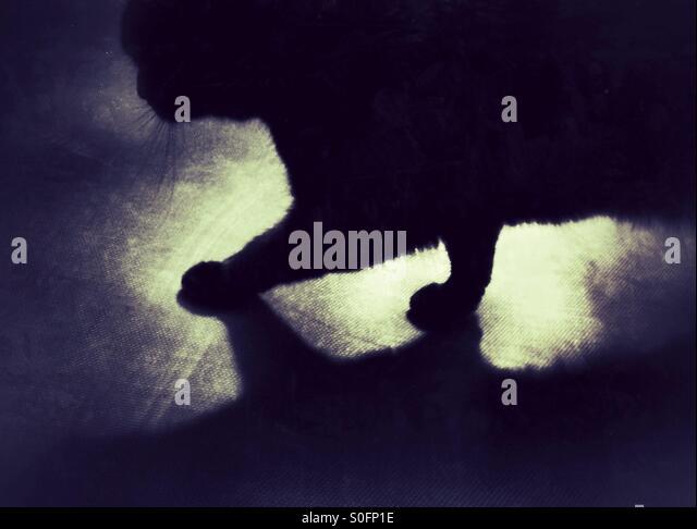 Shadowy cat closeup - Stock-Bilder
