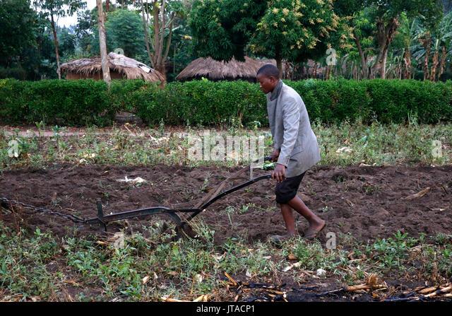 Ploughing, Kigumba, Uganda, Africa - Stock Image