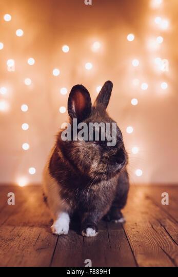 Rabbit during Christmas holidays - Stock-Bilder