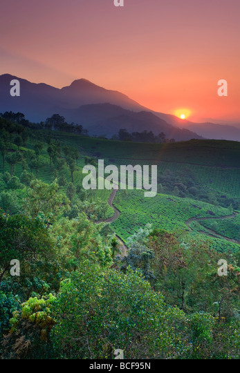 Tea Plantations, Munnar, Western Ghats, Kerala, India - Stock-Bilder