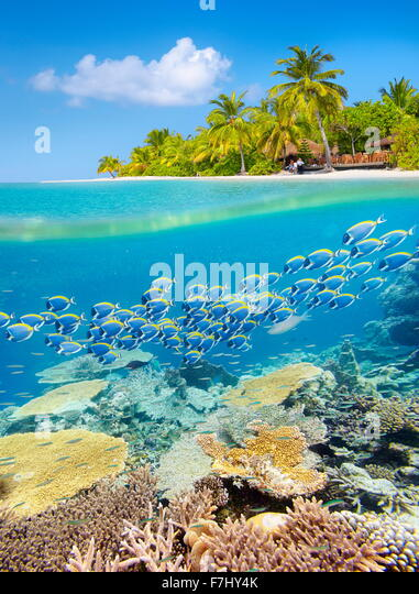 Maldives Island - tropical underwater view with reef - Stock Image
