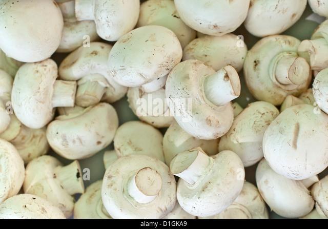 Mushrooms for sale at the Sunday morning market, Pollenca, Tramuntana, Mallorca, Balearic Islands, Spain, Europe - Stock Image
