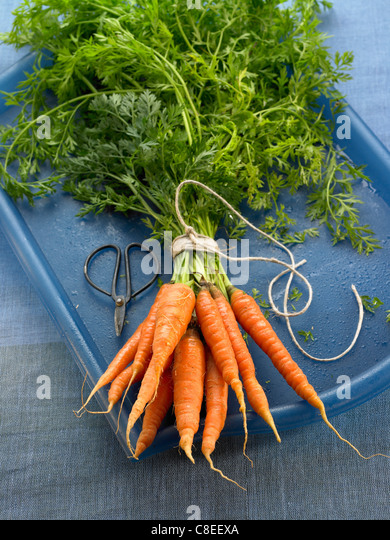 Bundle of carrots - Stock Image