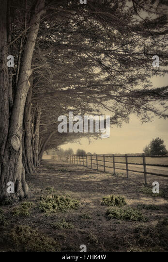 The Long Fence - Stock Image