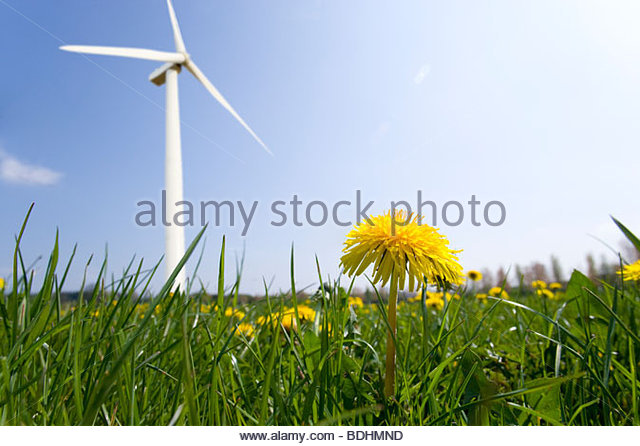 Wind turbine in field of spring dandelions - Stock Image