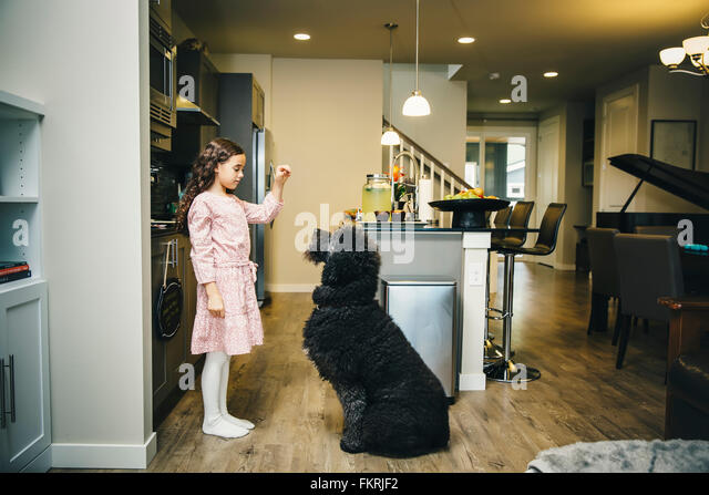 Mixed race girl training dog in kitchen - Stock Image