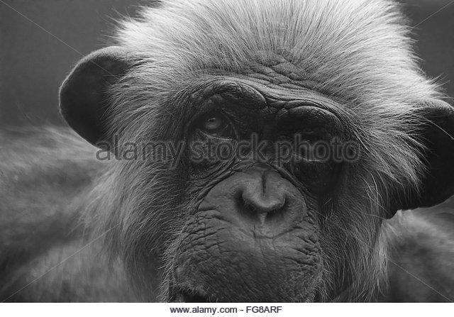 Close-Up Portrait Of Monkey - Stock-Bilder