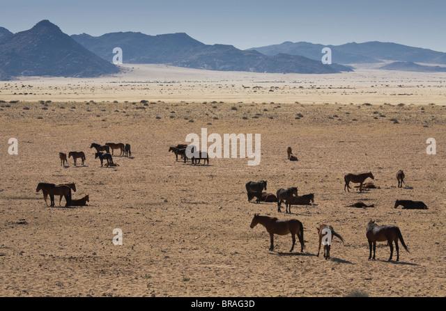 Wild horses, near Aus, Namib Desert, Namibia, Africa - Stock-Bilder