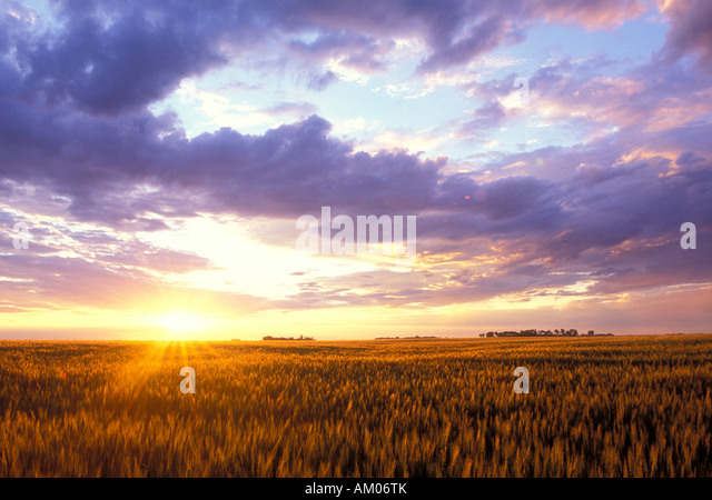 Sunset over a Wheat field in the Red River Valley of North Dakota - Stock Image