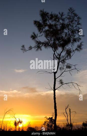 Australian sunset. Litchfield National Park Northern Territory - Stock Image