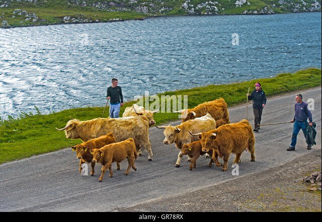 Crofter Scotland Stock Photos & Crofter Scotland Stock ...
